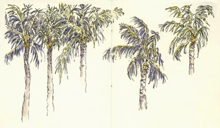 sketch_palm_trees