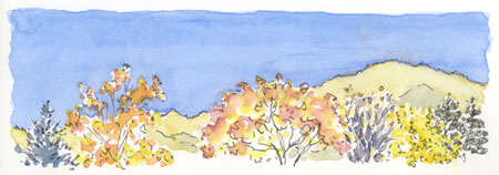 sketch_ashland_lithia_park_trees