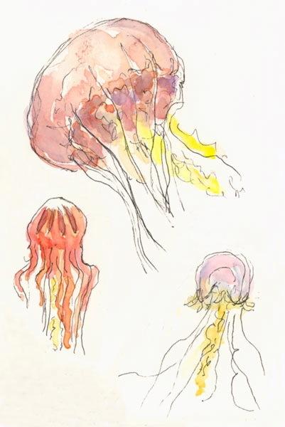 sea nettle jellyfish larger
