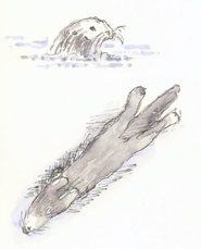 sketch_sea_otters